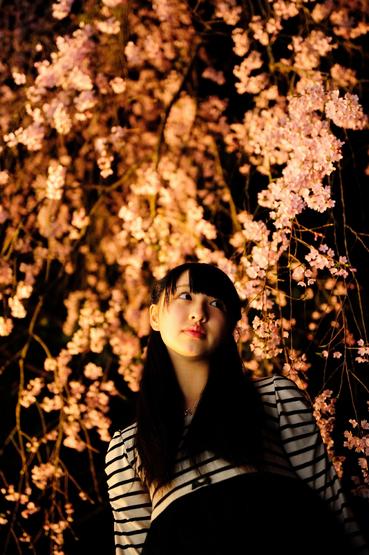 bijotabi-sakura-2013-2