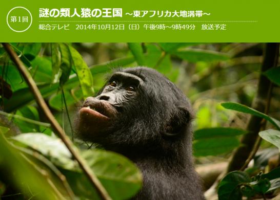 nhk-gorilla