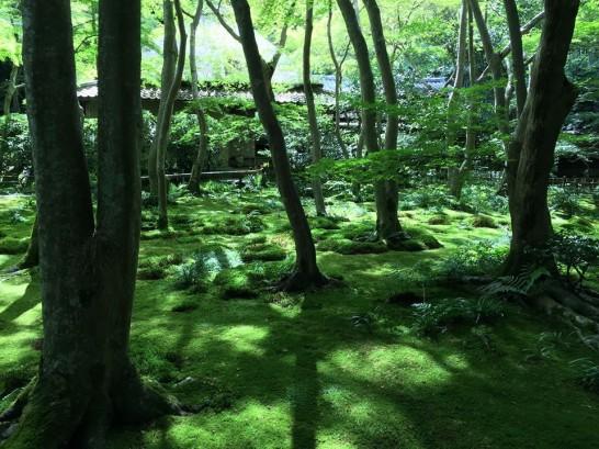 kyoto-2015-2